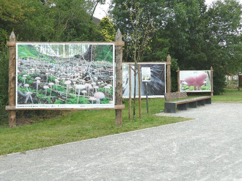 Großflächige Naturbilder schmücken die Umgebung der Boulebahn beim Bürgerhaus